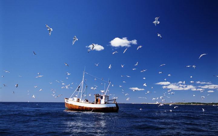 Fiskekutter og måger